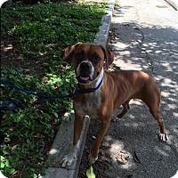 Adopt A Pet :: Trisha - Austin, TX