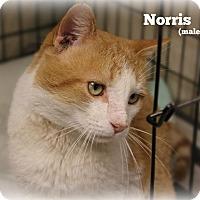 Adopt A Pet :: Norris - Glen Mills, PA