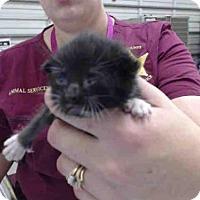 Adopt A Pet :: CHEVY - Tavares, FL