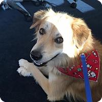 Adopt A Pet :: Cole - Tulsa, OK