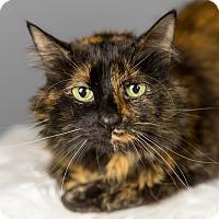 Adopt A Pet :: Jo - Columbia, IL