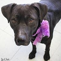 Adopt A Pet :: Pepper - Yukon, OK