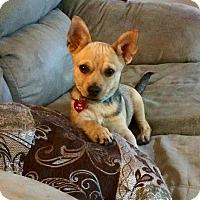 Adopt A Pet :: Elvis - Hialeah, FL