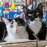 Adopt A Pet :: Liberty - Merrifield, VA