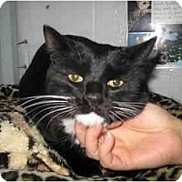 Adopt A Pet :: Squeeks - Mission, BC