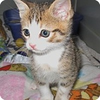 Adopt A Pet :: Leo - Shelton, WA