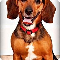 Adopt A Pet :: Dr. Wilson - Owensboro, KY