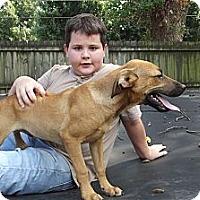 Adopt A Pet :: Charlie - Jackson, TN