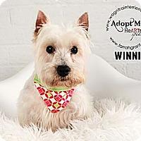 Adopt A Pet :: Winnie - Omaha, NE