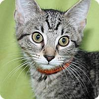 Adopt A Pet :: Daphne - Richland, MI