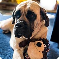 Adopt A Pet :: Montana - Phoenixville, PA