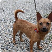 Adopt A Pet :: Paisley - Tinton Falls, NJ