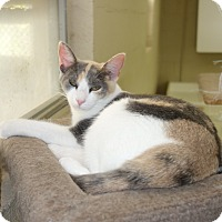 Adopt A Pet :: Bubbles - McDonough, GA