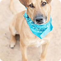 Adopt A Pet :: West - Houston, TX