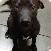 Adopt A Pet :: Mack - Meridian, ID