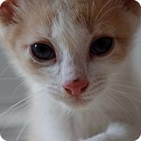 Adopt A Pet :: Landon - Byron Center, MI