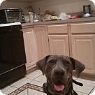 Adopt A Pet :: Jaylen