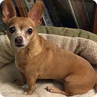 Adopt A Pet :: Paco - Huntsville, AL