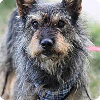 Adopt A Pet :: Palmer - Liberal, KS