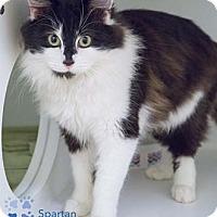 Adopt A Pet :: Spartan - Merrifield, VA
