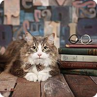Adopt A Pet :: JUNIOR - THORNHILL, ON