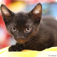 Adopt A Pet :: Foxy - Westchester, CA