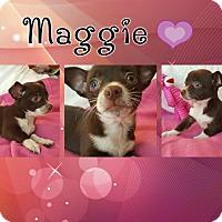 Adopt A Pet :: Maggie - Washington, DC