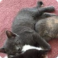 Adopt A Pet :: Memphis - Jerseyville, IL