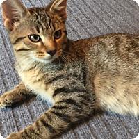 Adopt A Pet :: Raleigh - Colorado Springs, CO