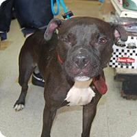 Adopt A Pet :: September - Brooklyn, NY