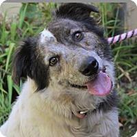 Adopt A Pet :: FANNIE - Red Bluff, CA