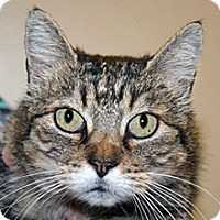 Adopt A Pet :: Annie - Wildomar, CA