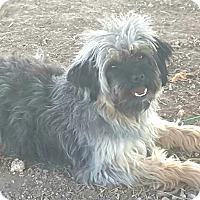 Adopt A Pet :: Bernaldo - Crosbyton, TX