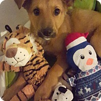 Adopt A Pet :: Luigi - Rosamond, CA