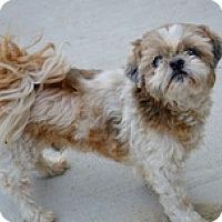 Adopt A Pet :: Walden - Rockwall, TX