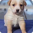 Adopt A Pet :: Buttercup's Buffy