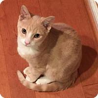 Adopt A Pet :: Nestle - Philadelphia, PA
