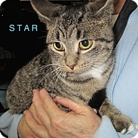 Adopt A Pet :: STAR - detroit, MI