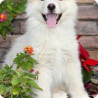 Adopt A Pet :: Minnie/Nina (PLACED) Adoption_Pending - Glendale, AZ