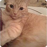 Adopt A Pet :: Dickens - Los Angeles, CA