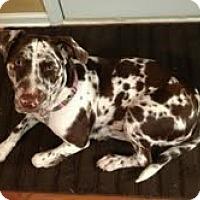Adopt A Pet :: AZULA-JJ - Roundup, MT