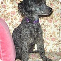 Adopt A Pet :: Sophie - Mooy, AL