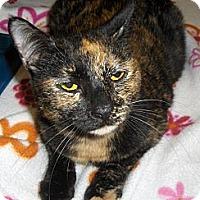 Adopt A Pet :: Karla - Richmond, VA