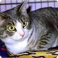 Adopt A Pet :: Clover - Medway, MA