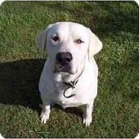 Adopt A Pet :: Willie Nelson - Kingwood, TX