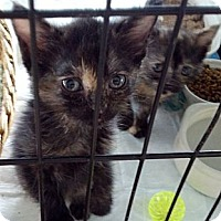 Adopt A Pet :: Bubbles and Troubles - Dallas, TX