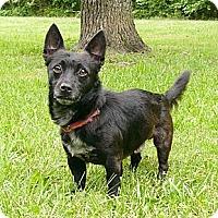 Adopt A Pet :: Lancelot - Mocksville, NC