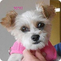 Adopt A Pet :: Mimi - Arenas Valley, NM