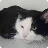 Adopt A Pet :: Arnie - Milwaukee, WI
