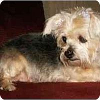 Adopt A Pet :: Charlotte - Mooy, AL
